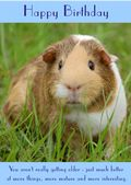 "Guinea Pig-Happy Birthday - ""You Aren't Really Getting Older"" Theme"